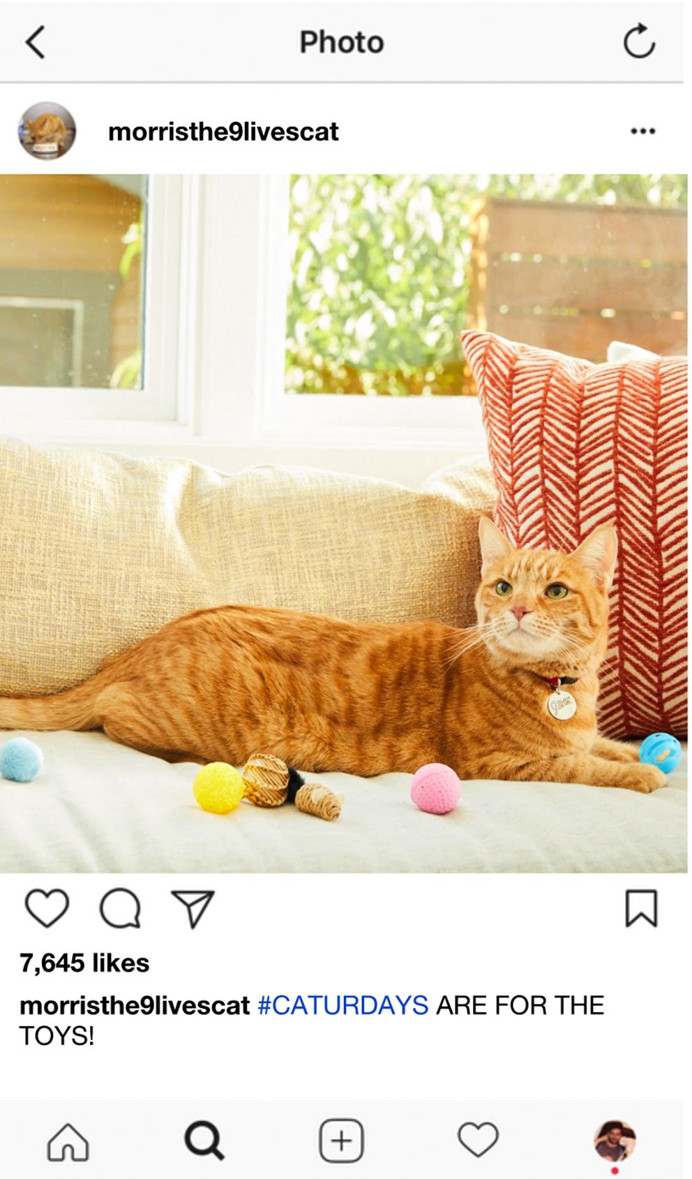 MorristheCat_InstagramGold__0006_Screen Shot 2017-08-29 at 4.27.30 PM.jpg