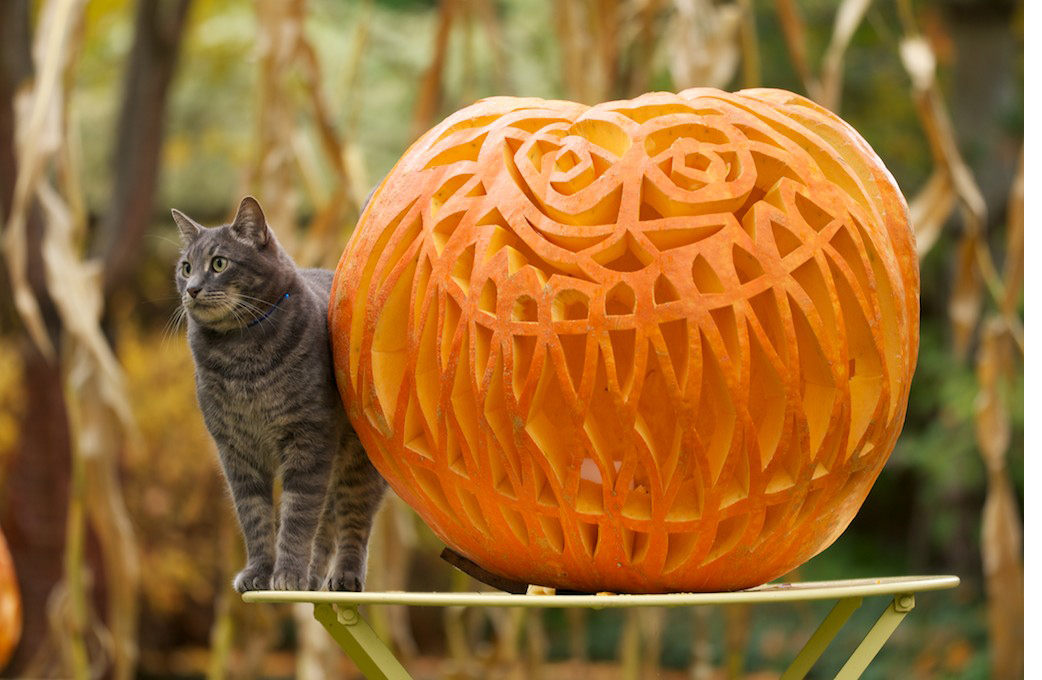 Pumpkins 2013_2.jpg