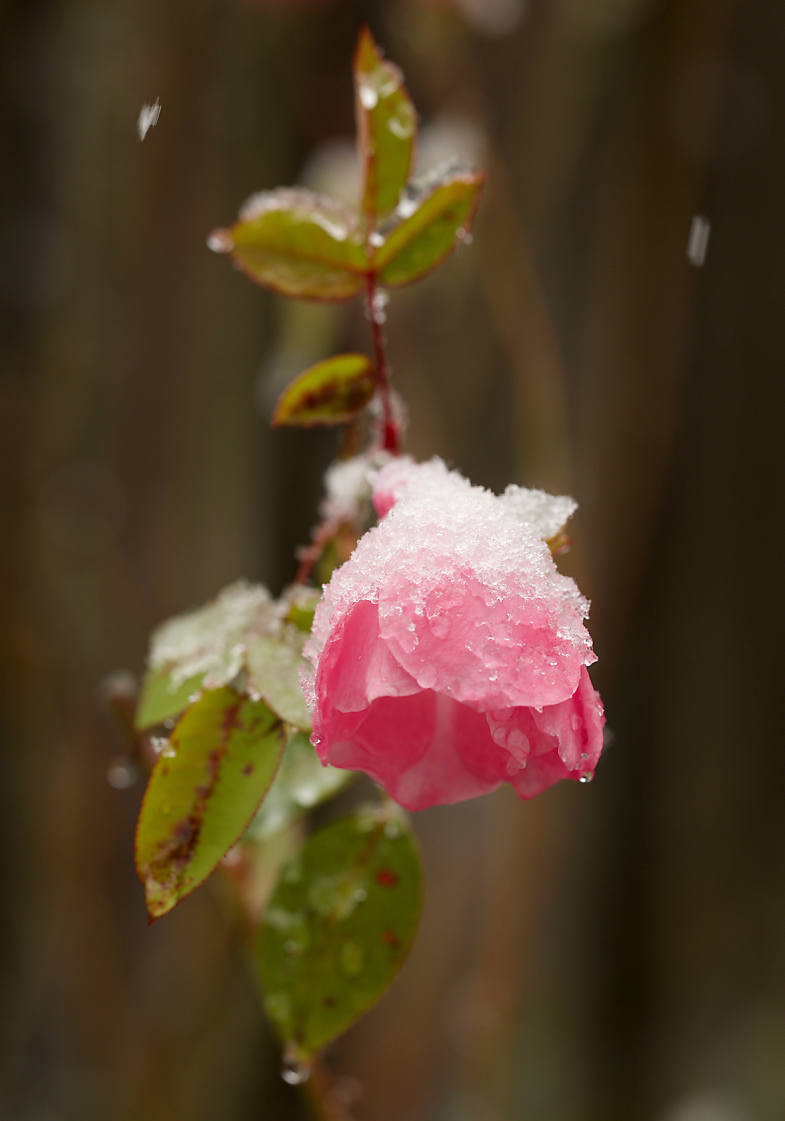 SnowPlants2Blog.jpg