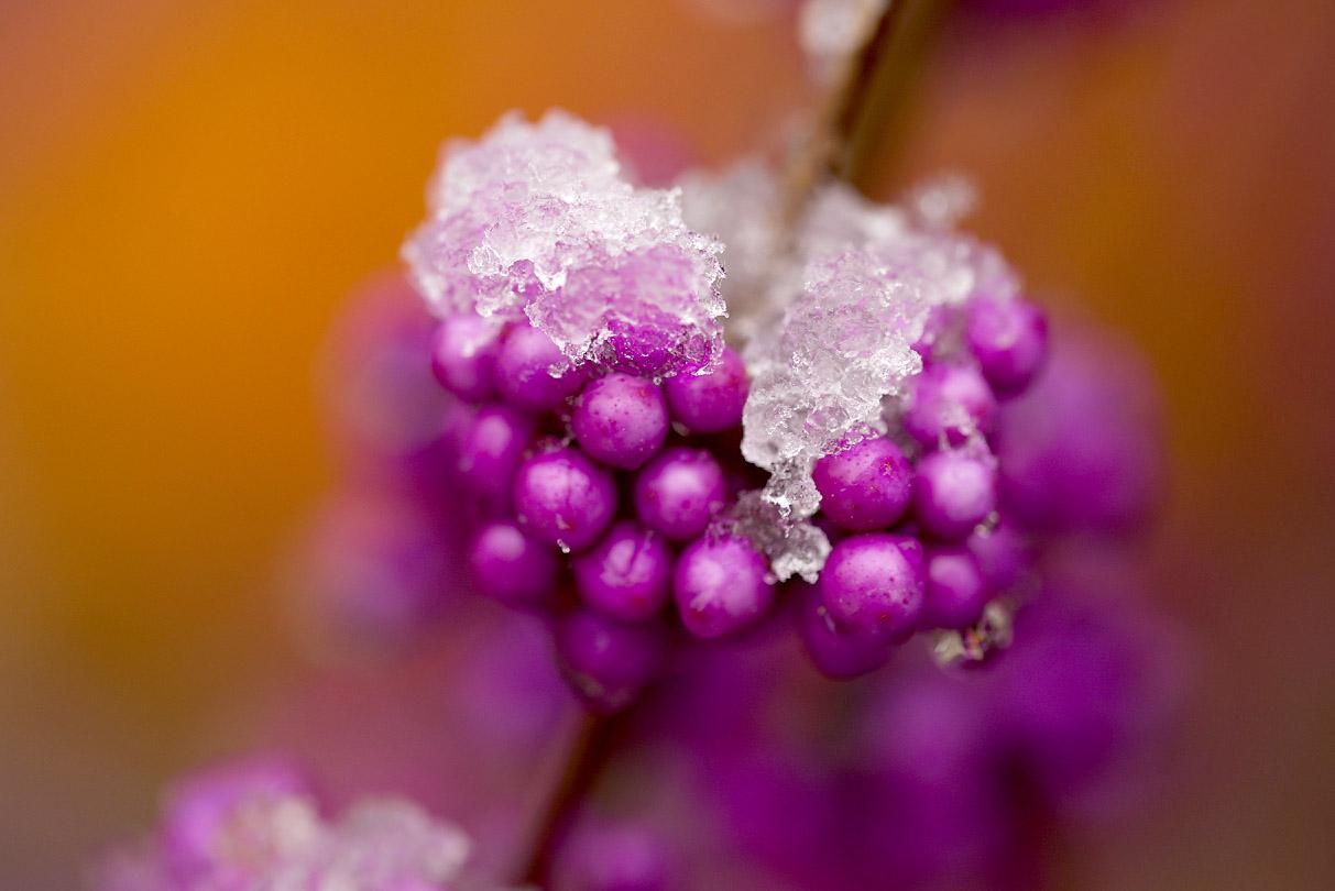 SnowPlants12Blog.jpg