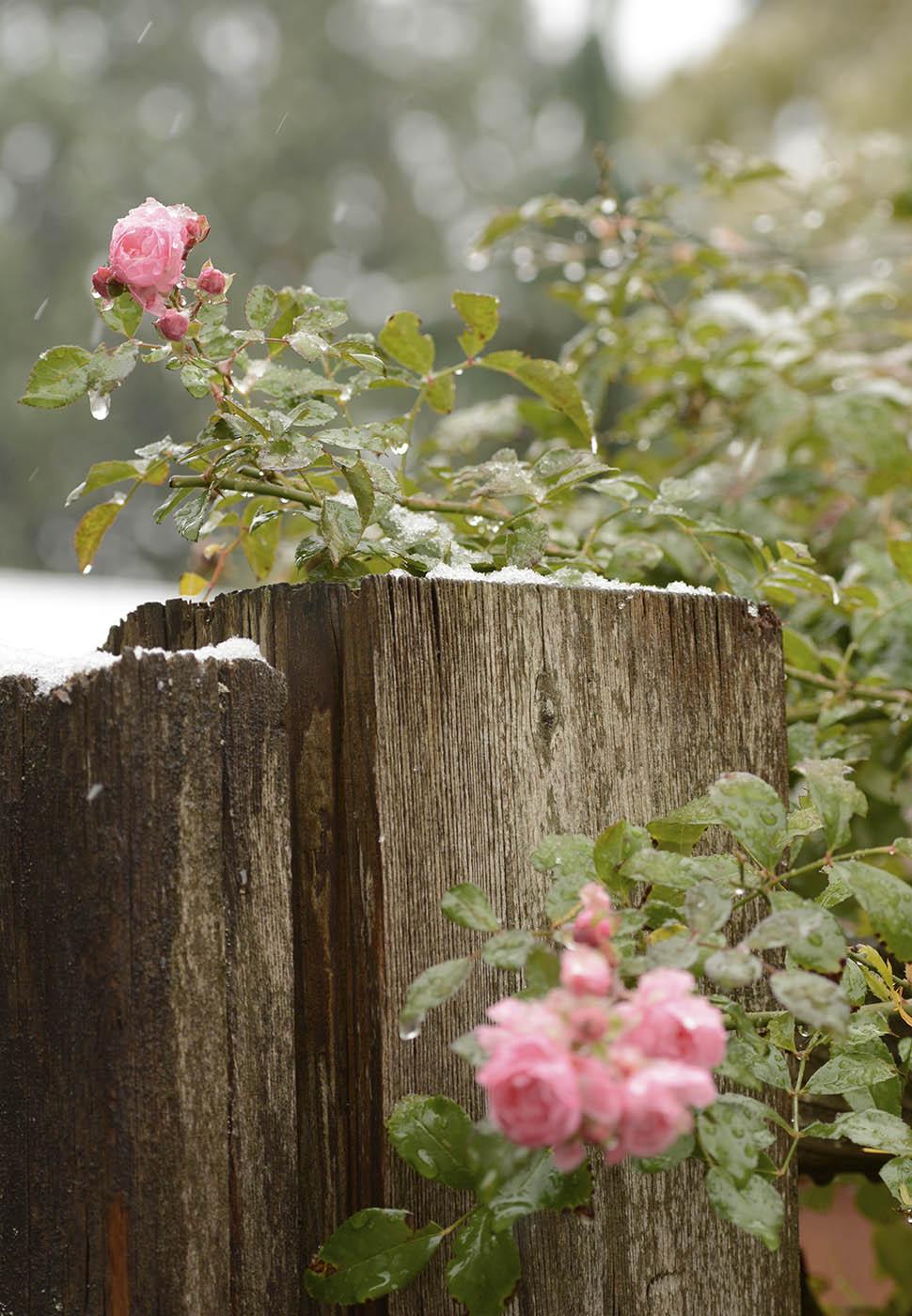 SnowPlants7Blog.jpg