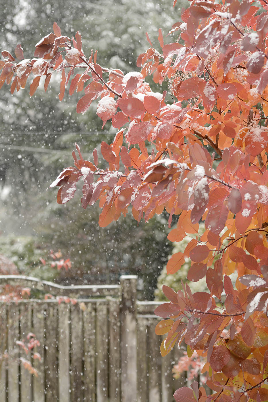 SnowPlants6Blog.jpg