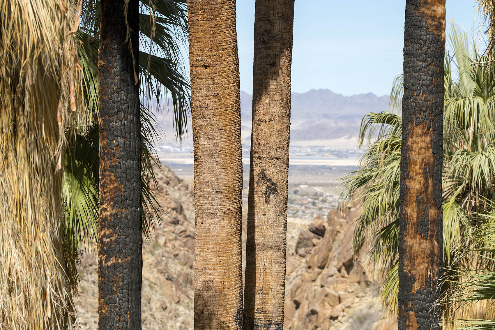kick spark 49 palms hike 7.jpg