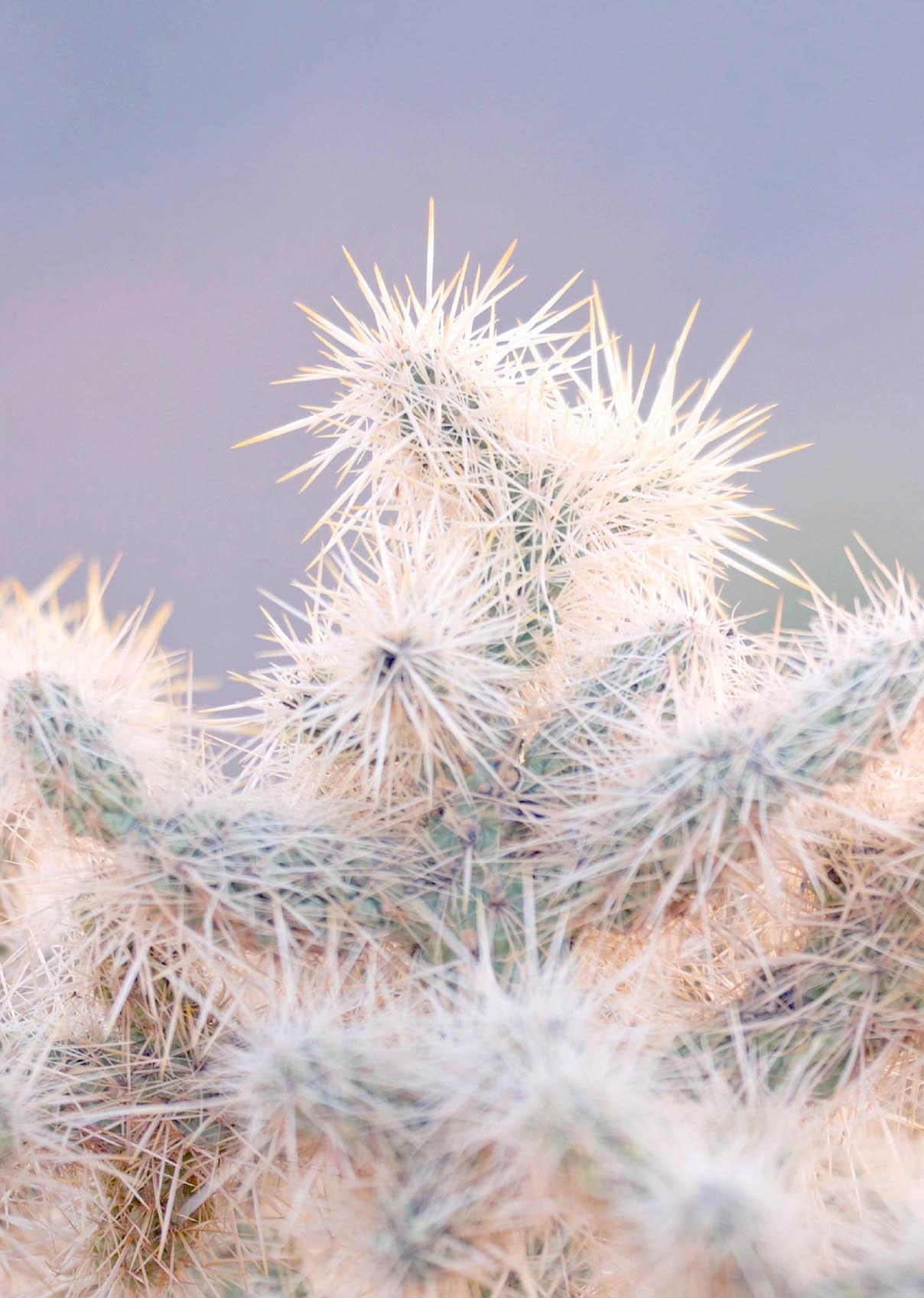 Joshua_Tree_Cactus4_kick_spark©.jpg