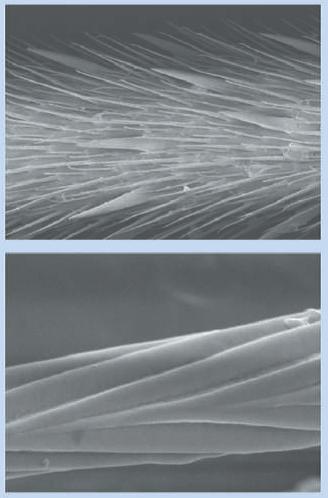Imagen tomada de X. Gao. Arriba: microsetas en las patas. Abajo: nanosurcos en las microsetas