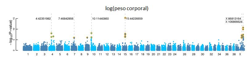 Figura 1. Imagen reproducida con pequeñas modificaciones de Boyko AR, et al., 2010. A Simple Genetic Architecture Underlies Morphological Variation in Dogs (ver bibliografía para más detalles).