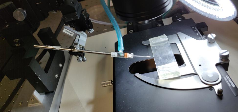 Microscopio y sostén de agujas de cuarzo para microinyección de huevos de insecto. Foto: Emiliano Cantón