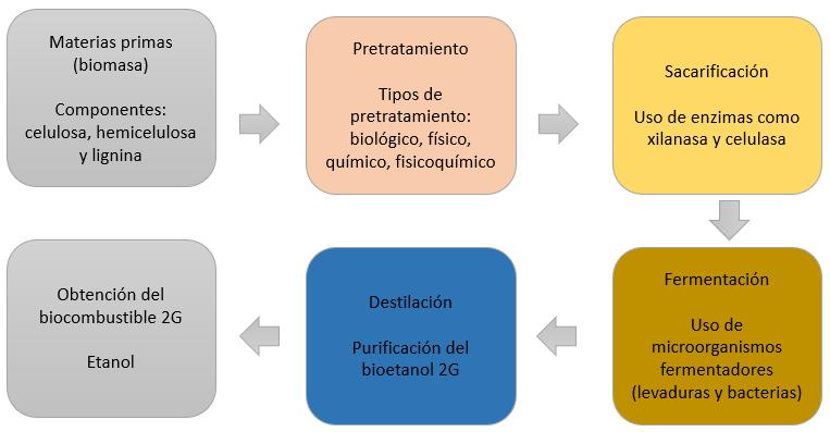 Imagen 1. Etapas del proceso general para producir bioetanol 2G. Dibujado con información de  Vasco-Correa et al., 2016 .