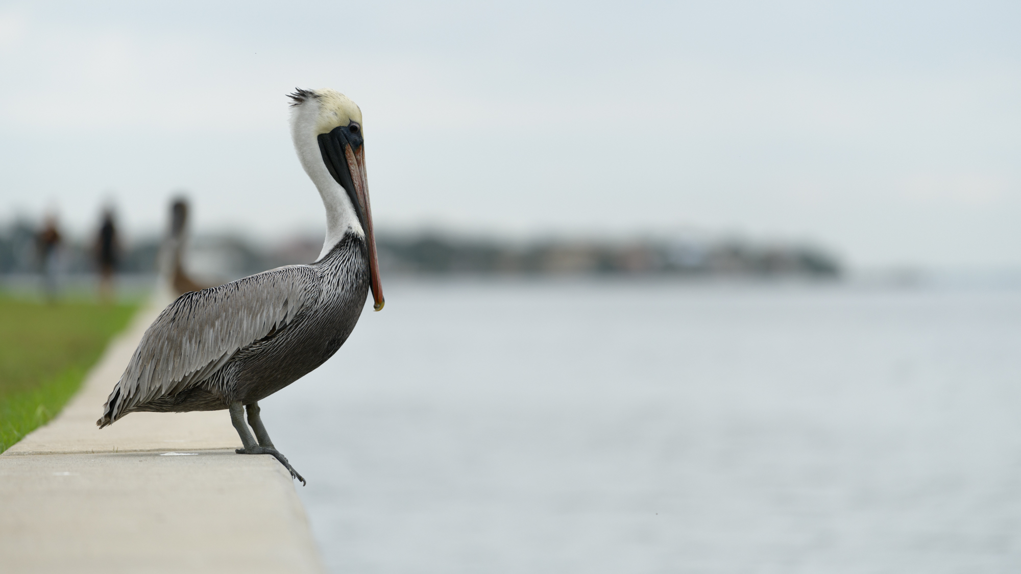 Tyler Harney Photography-Petersburg and pelican.jpg