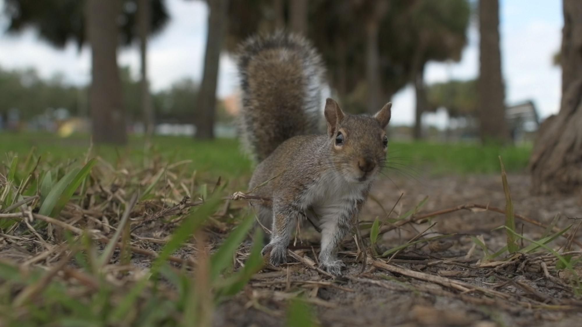 Tyler Harney Photography-Petersburg and squirrel.jpg