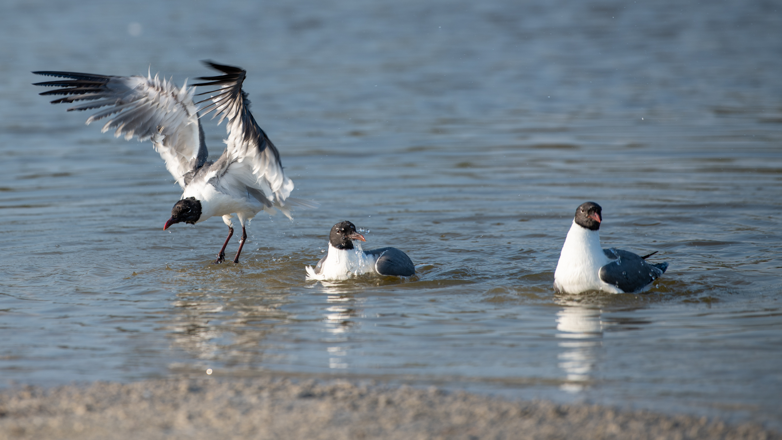 Birds at Honeymoon State Park.jpg