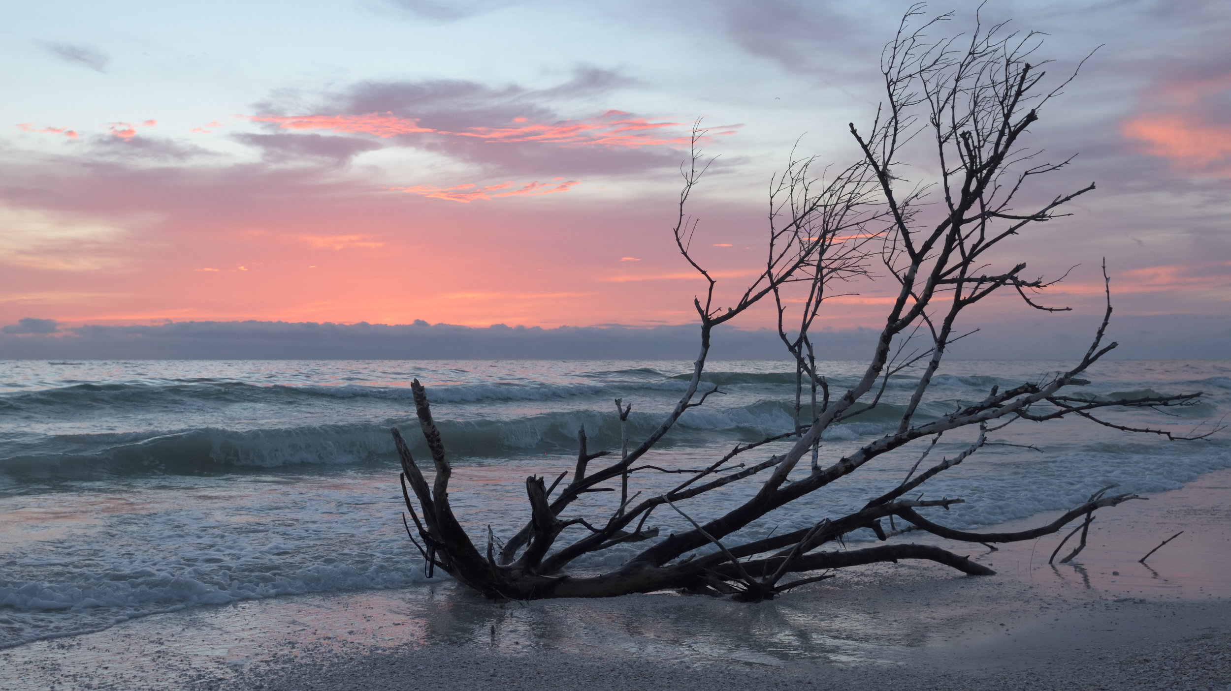 Tyler Harney Tampa Beach Sunset Tree.jpg