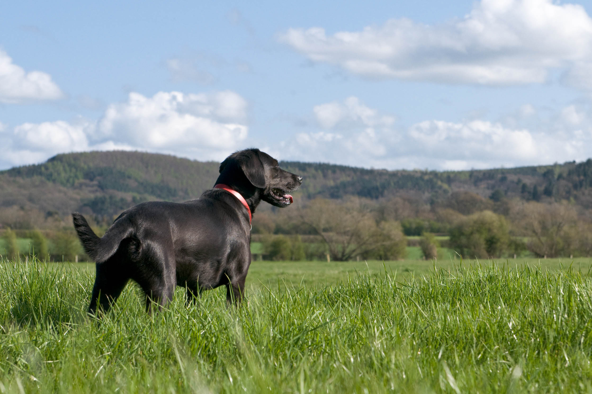Bring your four legged friend   Well behaved dogs welcome    Explore