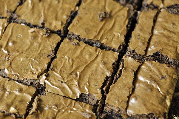 Glossy Brownies_ECU Cut Squares.jpg