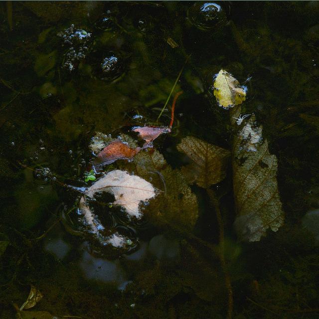 Lower Hinckley Pond, South Portland, ME