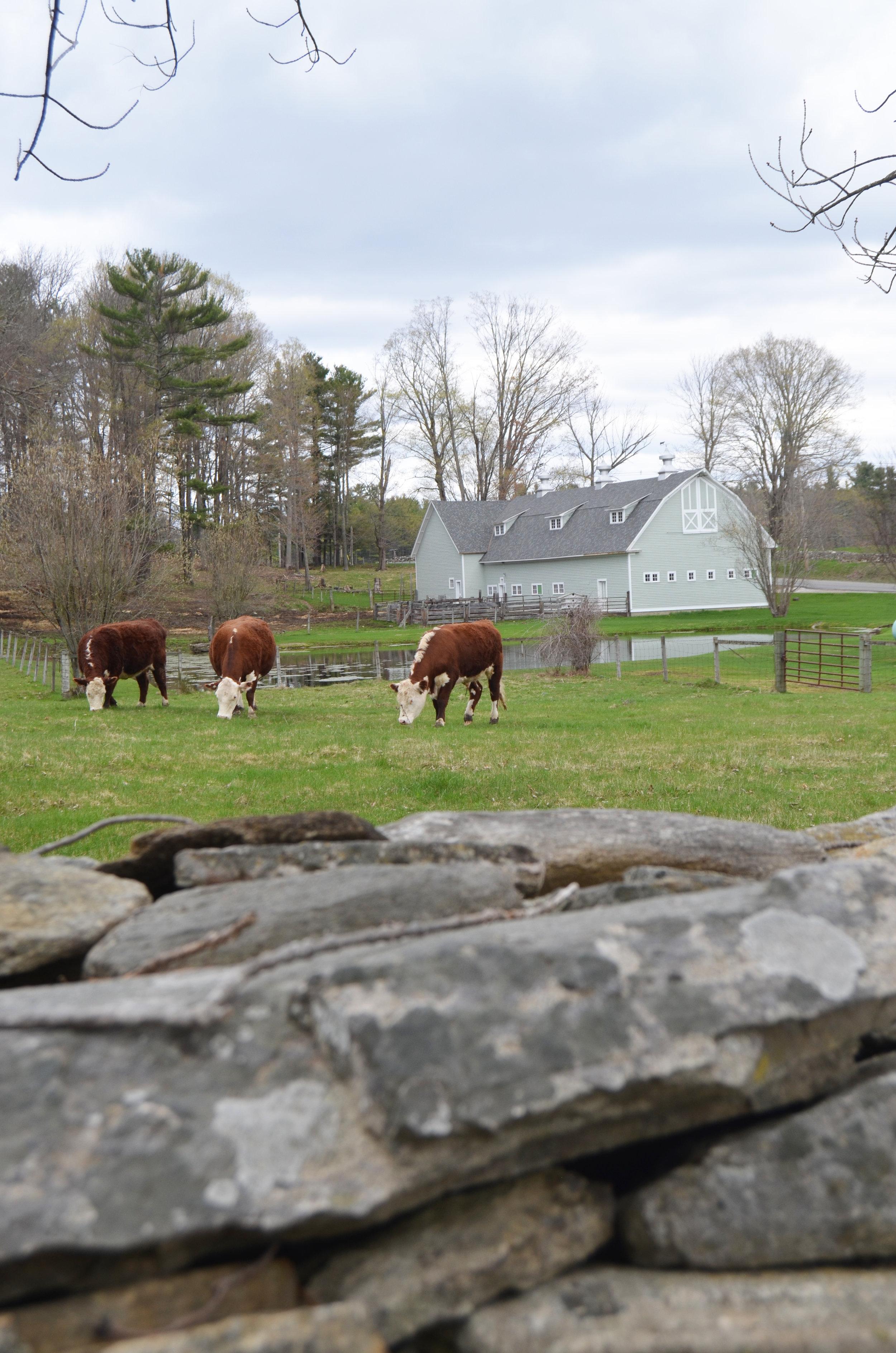 Freeman Elms Farm