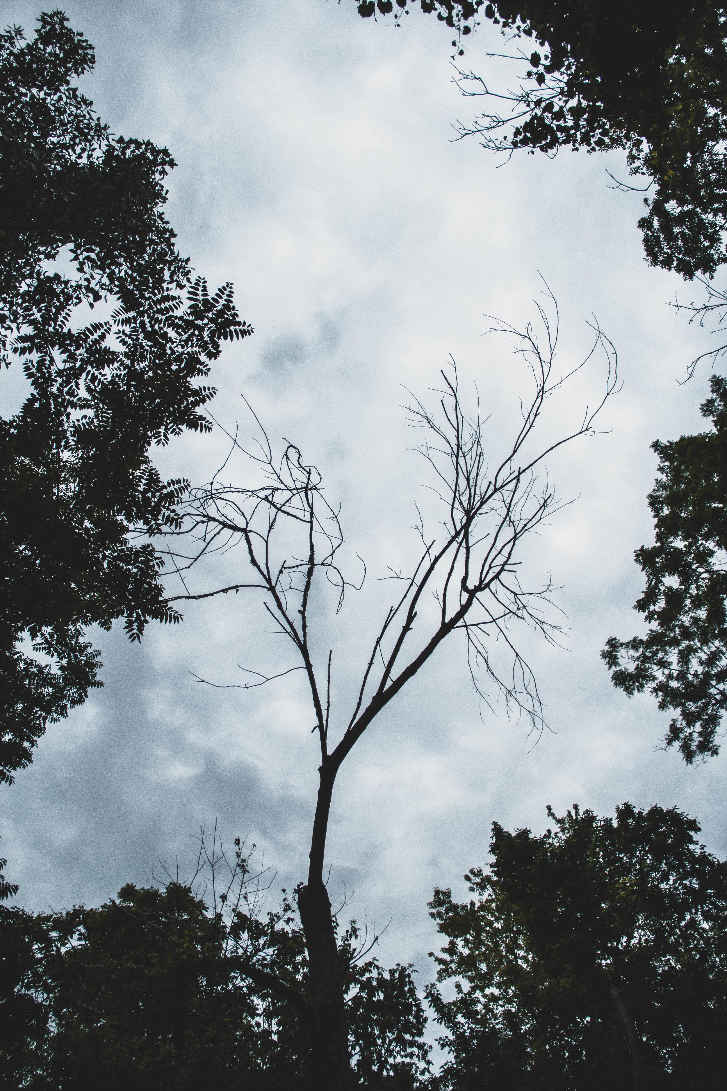 Tree_Shadow-2.jpg