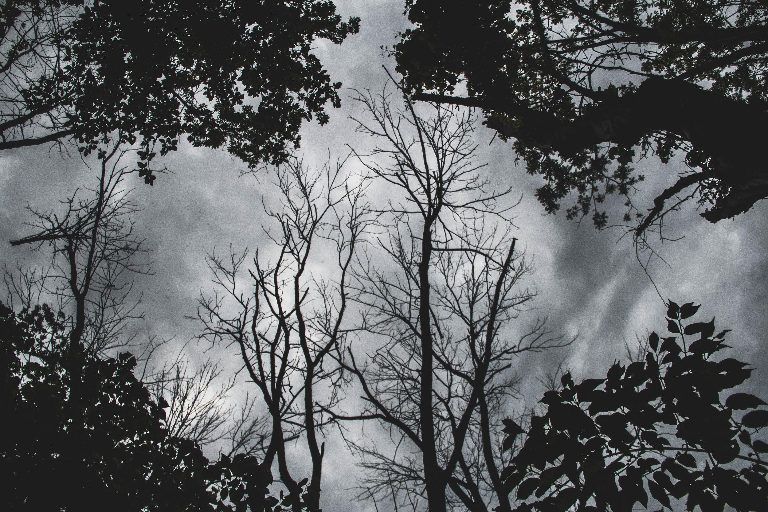 Tree_Shadow-3.jpg