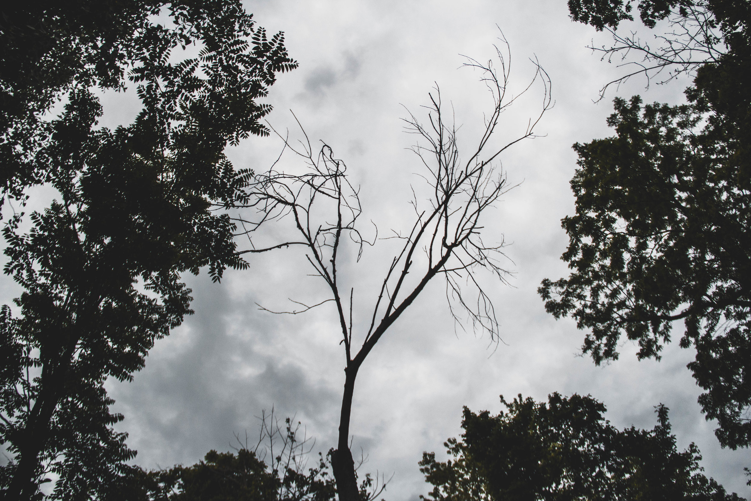 Tree_Shadow.jpg