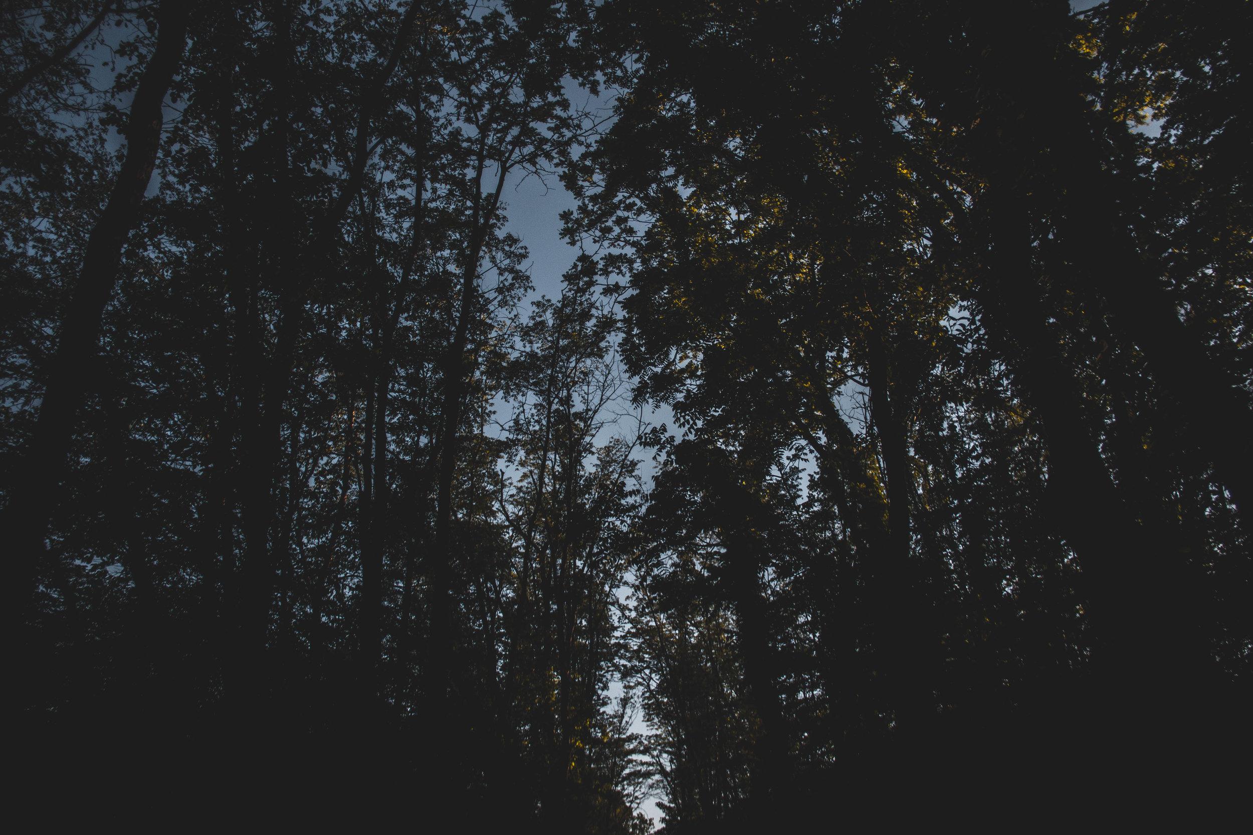 PO_Landscape_-18.jpg