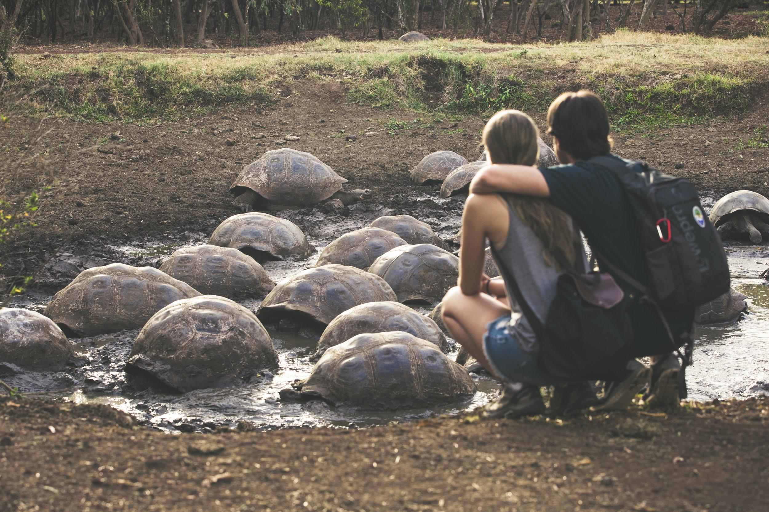 Giant_Tortoises.jpg