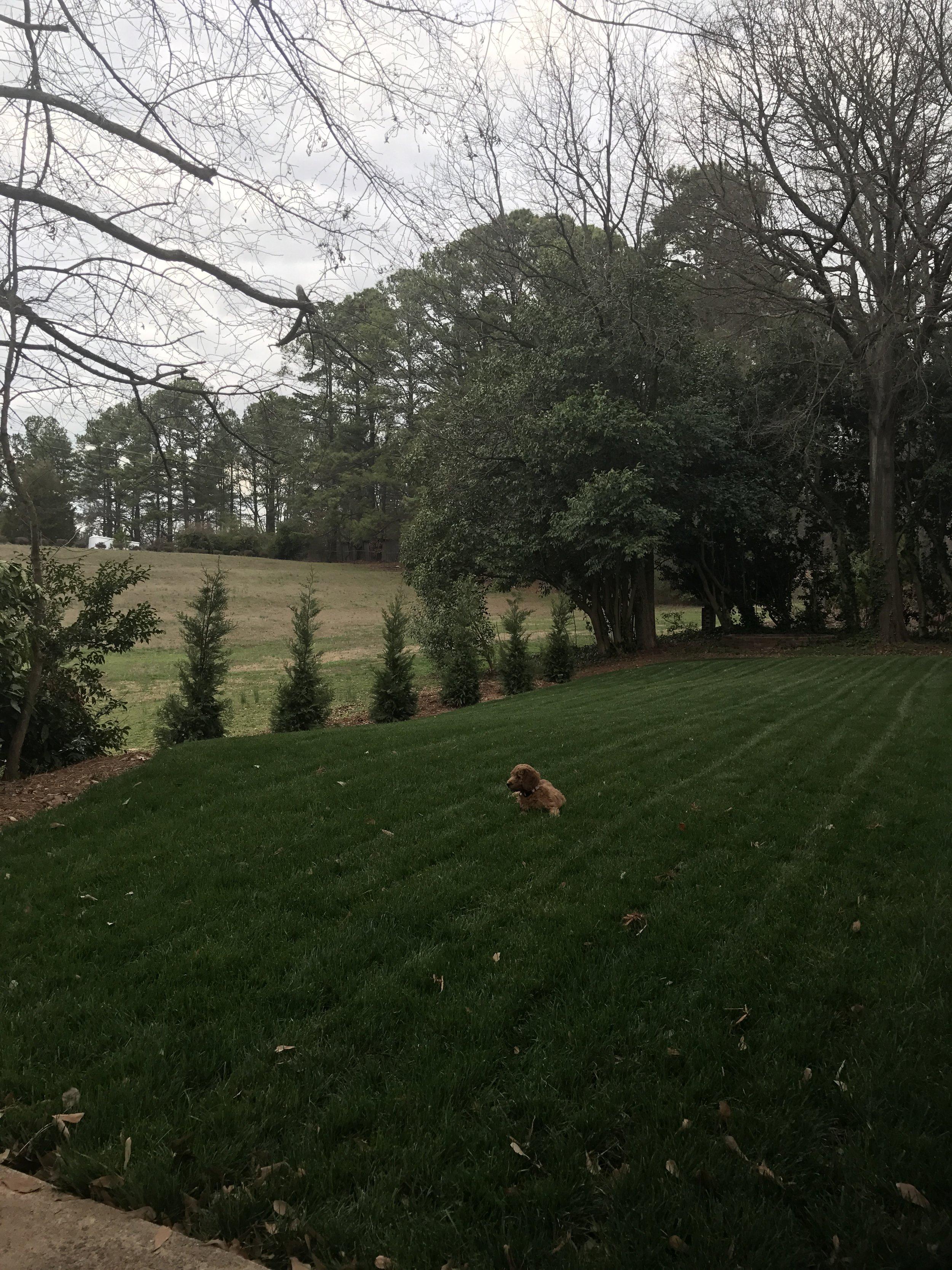 GRASS!