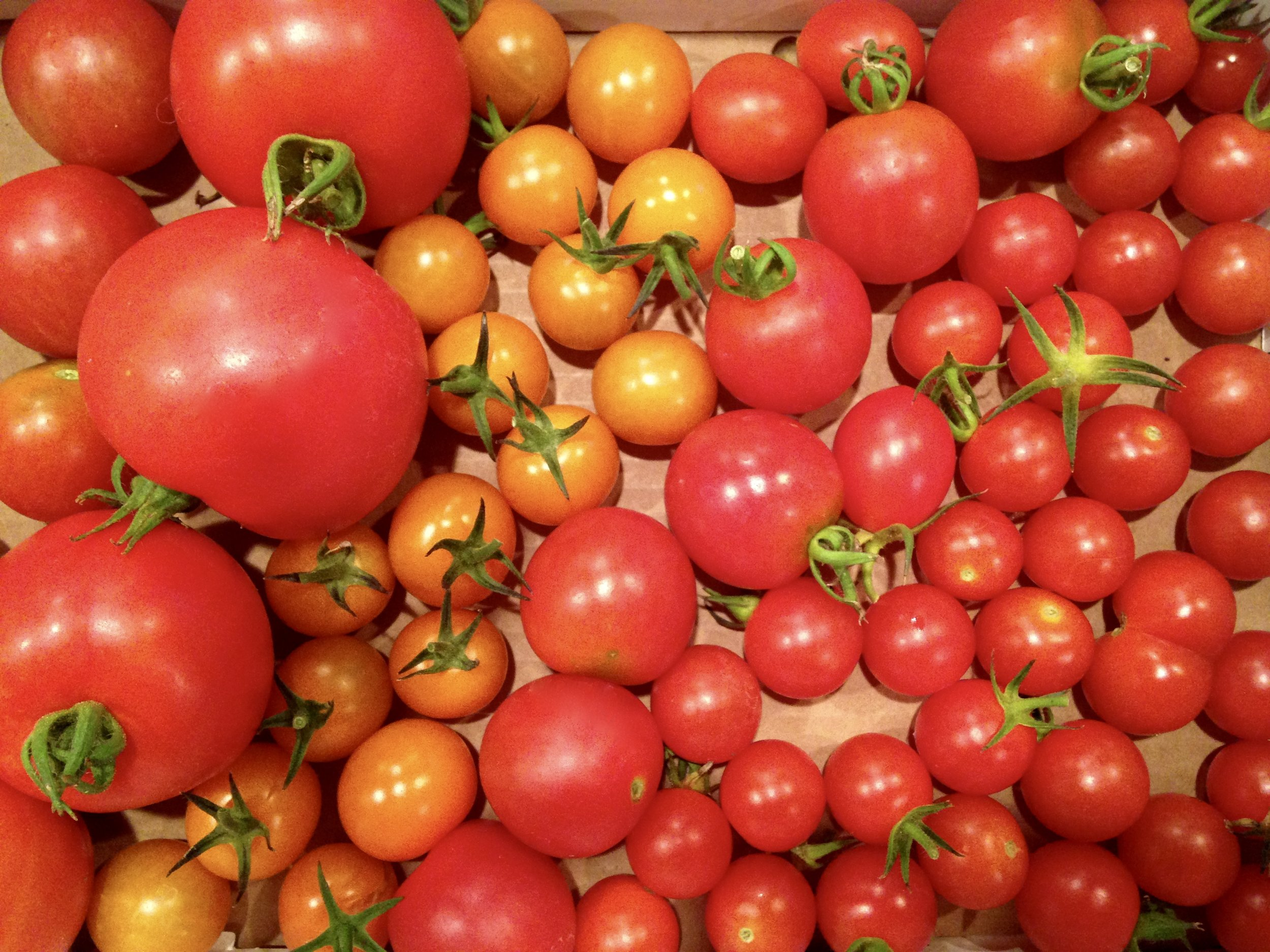 Don't be afraid to experiment with different types of tomatoes. Throw whatever in you can find, I promise it will taste good!
