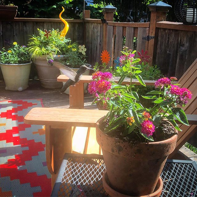 Gratitude comes easy in moments like these! . Very thankful for my back deck, the flowers and veggies I've planted on it, and the beautiful little visitors that come by daily. . . . #dailygratitude #grateful #backdeck #myview #takealookoutside #natureheals #hummingbirds #friendlyvisitors #flowers #plants #ilovethisview #makeyourenvironmentbeautiful #createyourspace #sunnyday #beautifulday #thingsthatmakemehappy #countingmyblessings #gardenlove #happythings #hummingbirdgarden