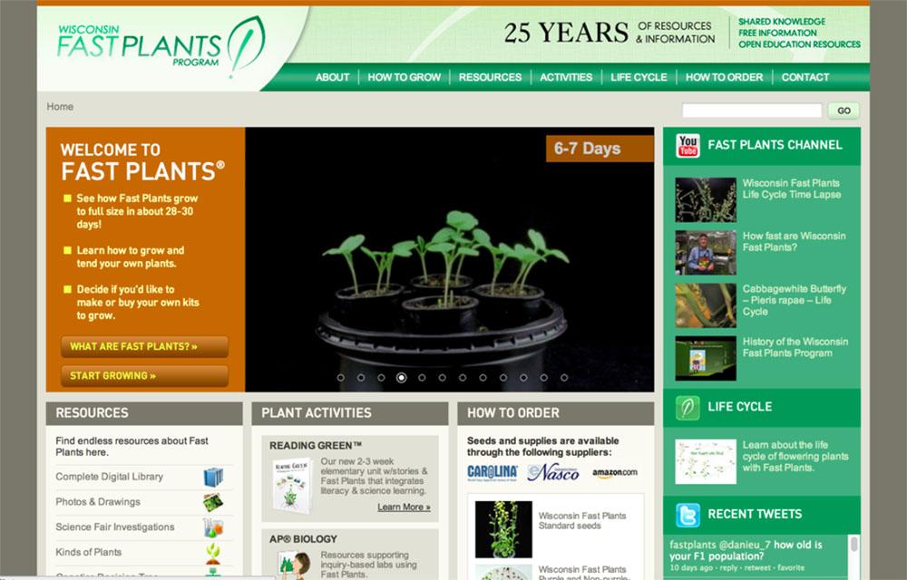 Hybridized 'Fast Plants'