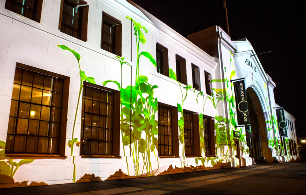 Plant growth facade projection
