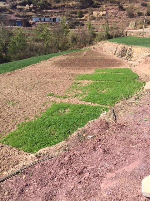 Retaining walls are needed to hold and sustain each level of pasture land.
