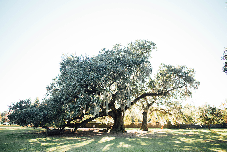 Lisa + Rock-Tree-of-Life-New-Orleans-Audubon-Park-Elopement_Print_0003.jpg