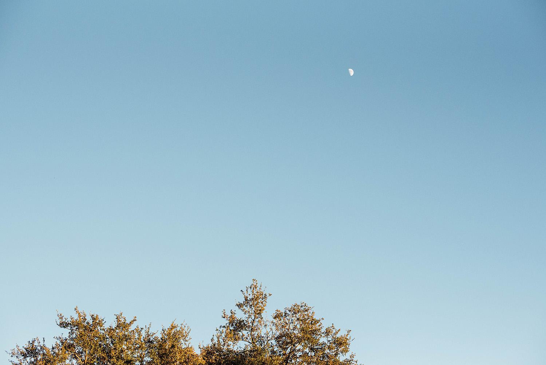Lisa + Rock-Tree-of-Life-Audubon-Park-New-Orleans-Elopement-Photos_Online_0262.jpg