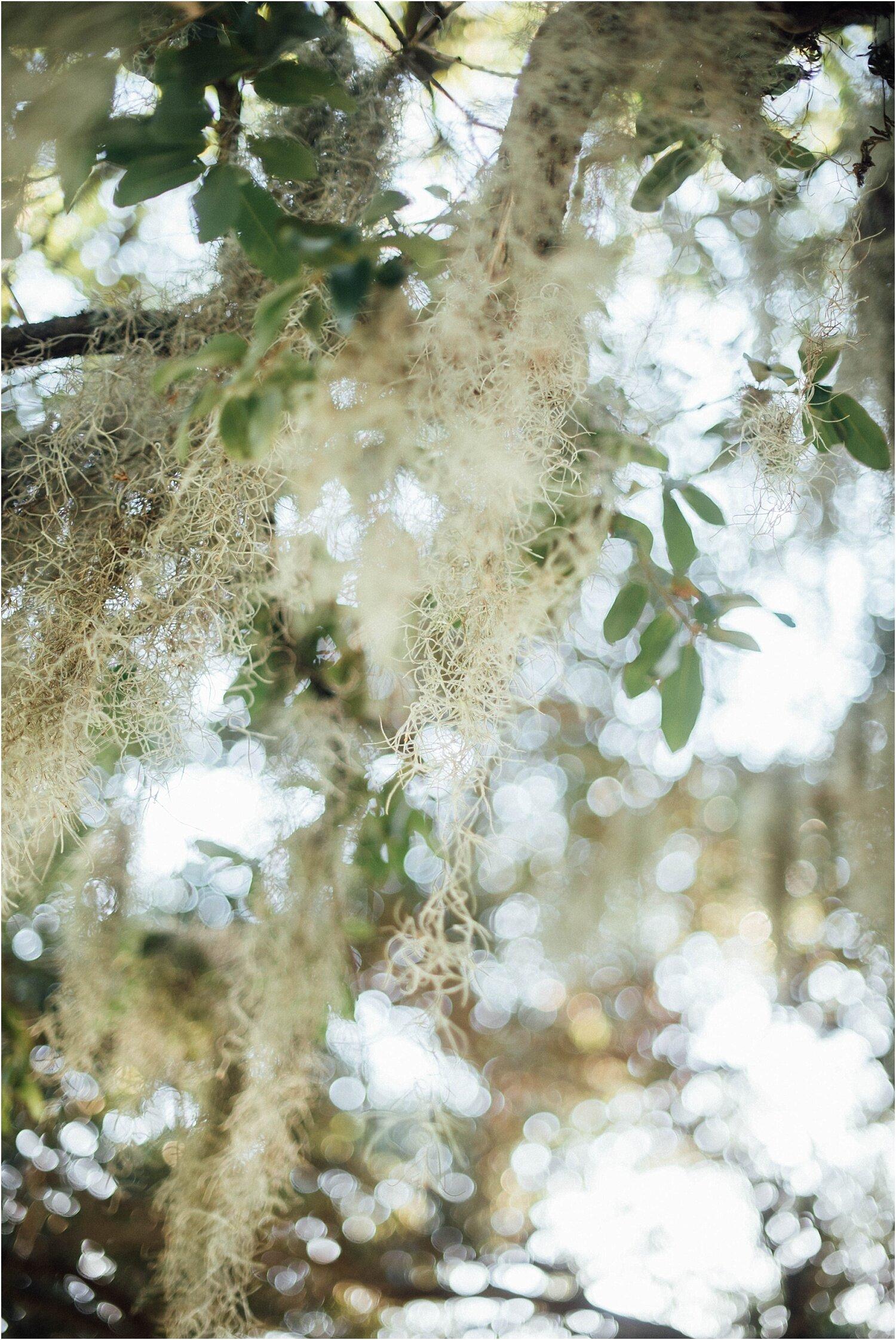 Maisha + Shaun-Fountainbleau-State-Park-Engagements_Gabby Chapin_Prints_0001_BLOG.jpg