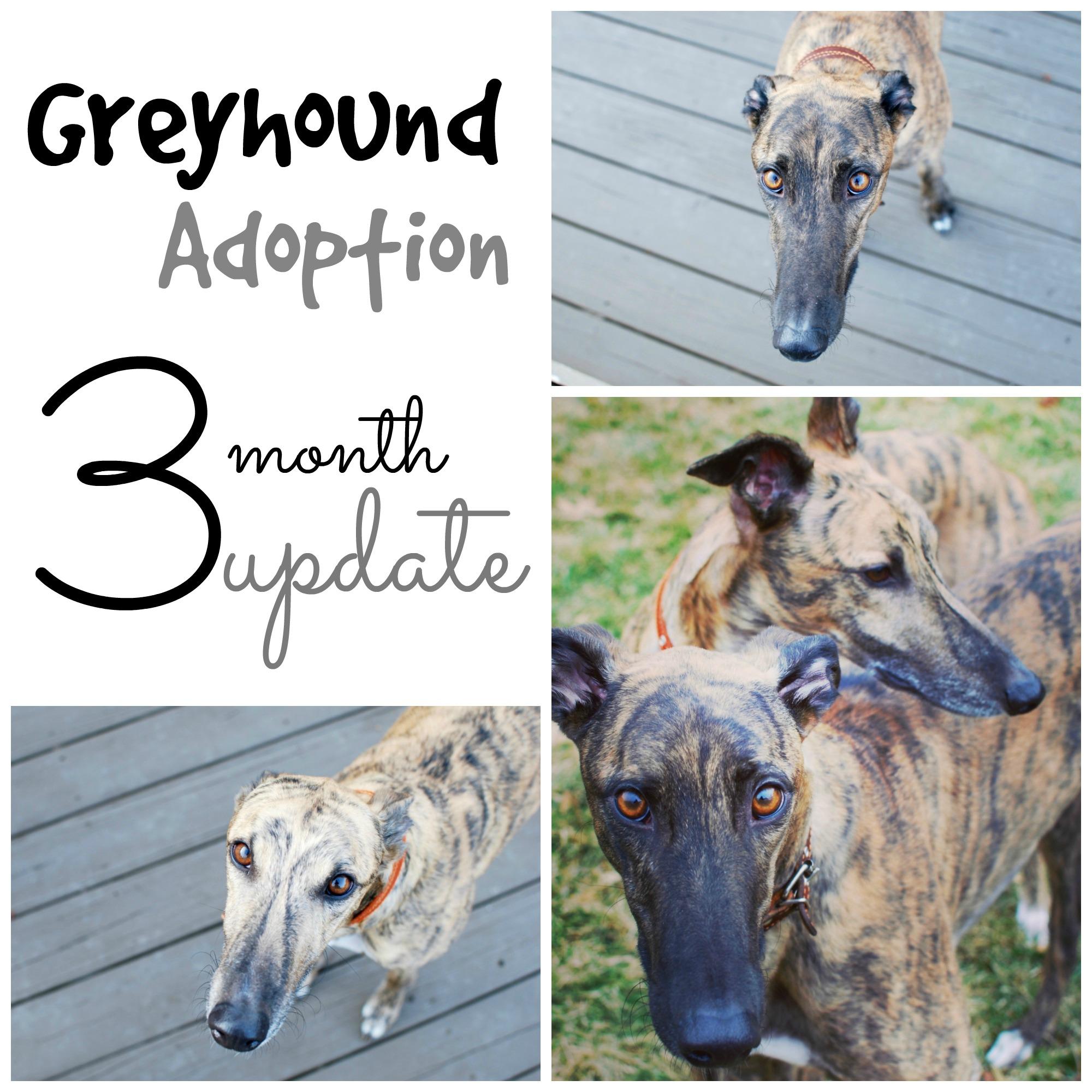 adoption-update_pin.jpg