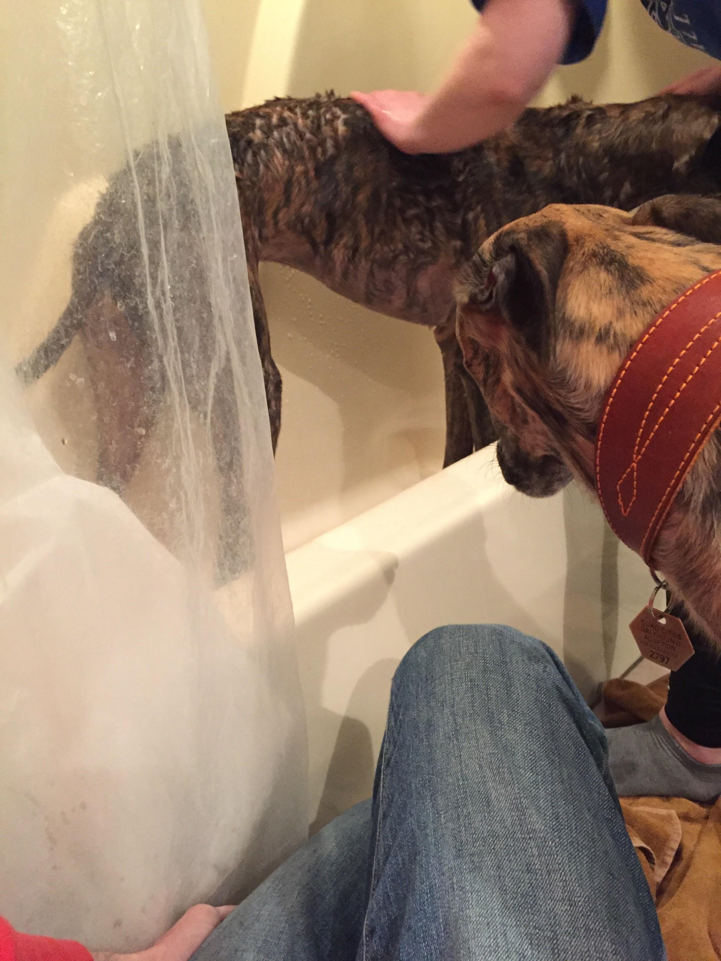 roman-bath.jpg