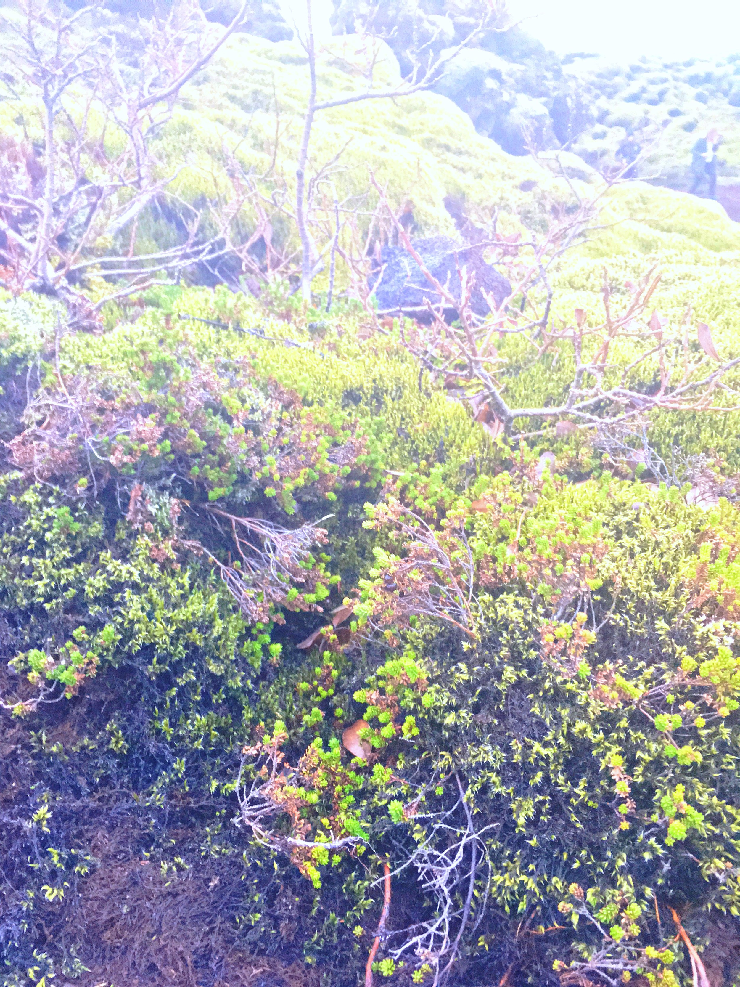 Vegetation grows on lava rocks on Iceland's Ring Road in Skaftarhreppur.