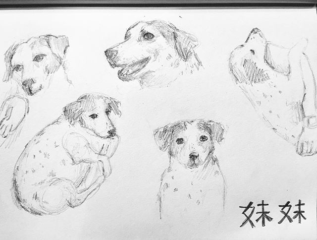 #31daysofdrawing  #day2 #drawing #sketch #dog #iszaf #challenge #mydog #meimei #shenzhen #art #artist #instasketch #drawingoftheday