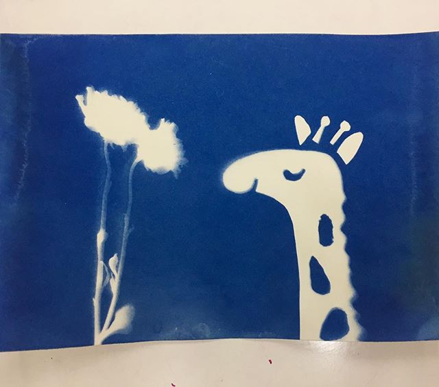 #31daysofdrawing #day8 #cyanotype #giraffe #print #illustration #art #artistsoninstagram #nature