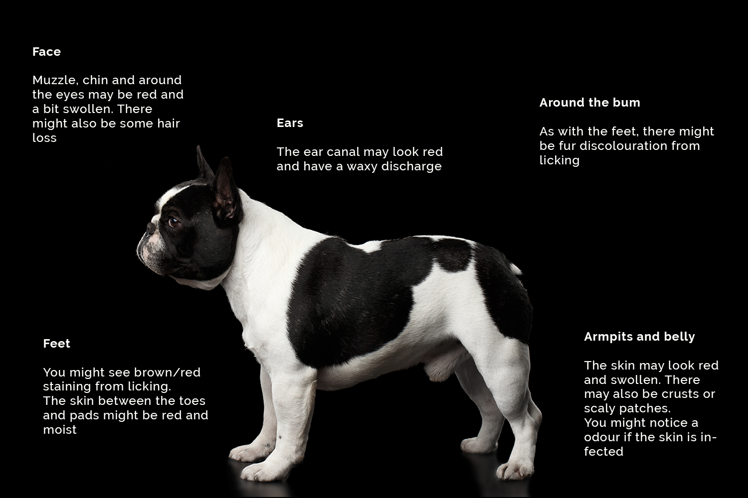 Frenchie atopy.png