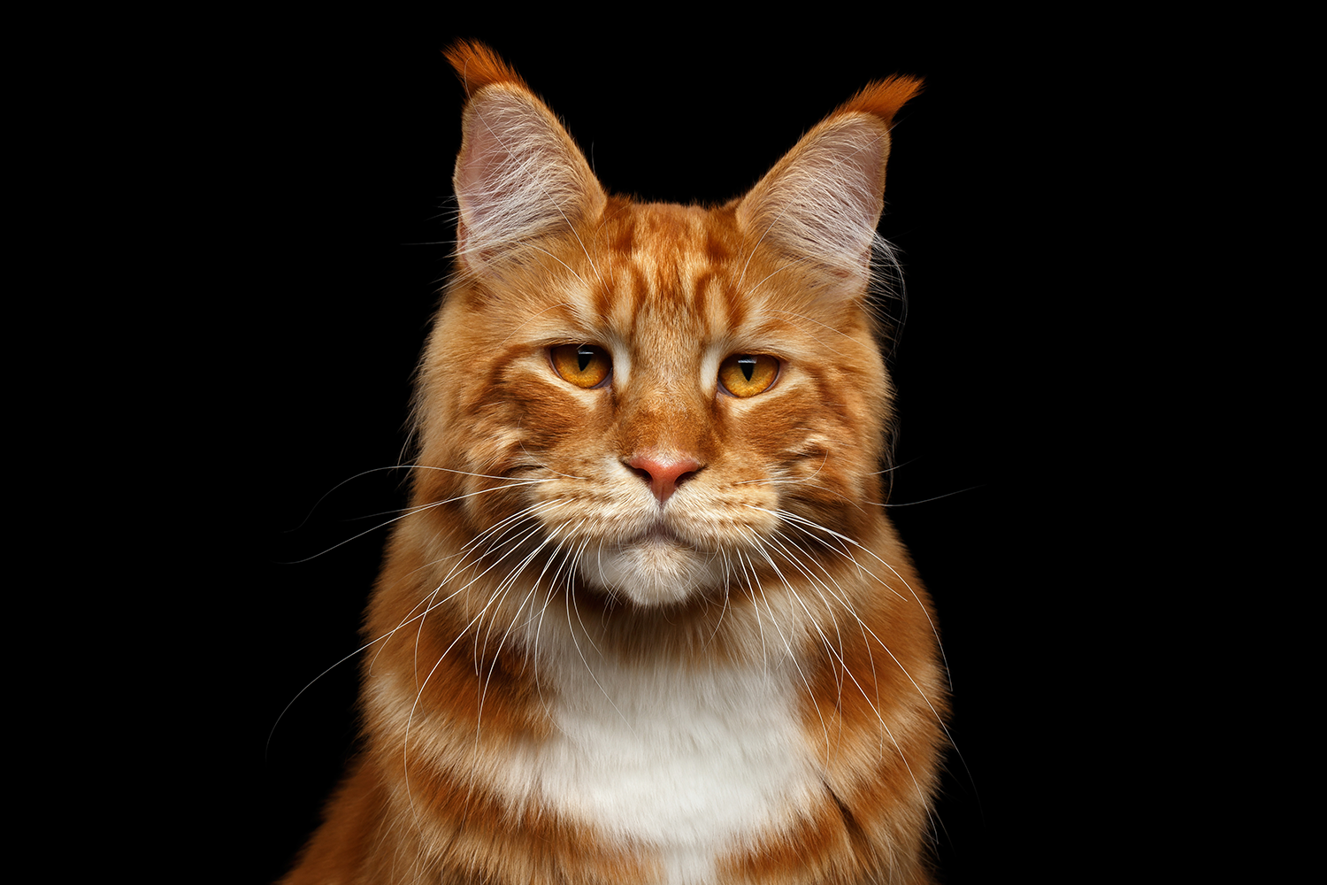 Ginger tufts.png