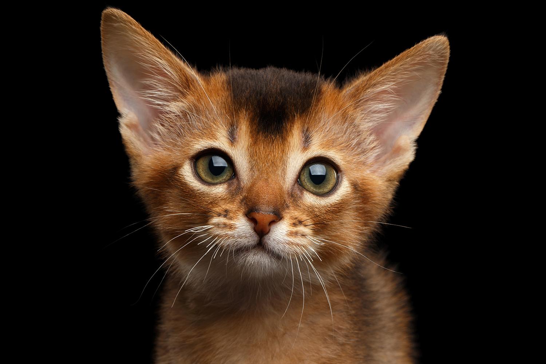 Abby kitten.png