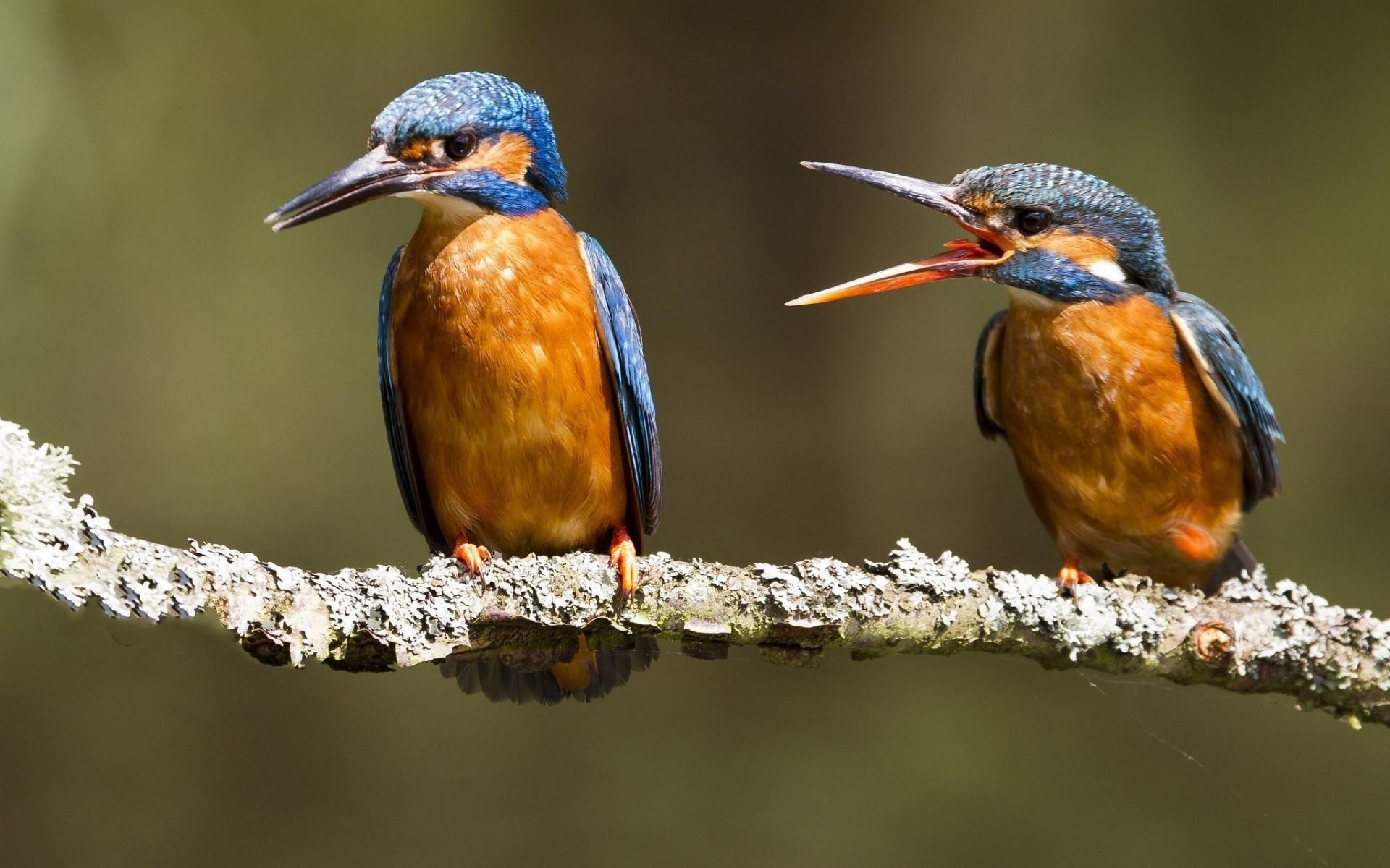 desktopgraphy.com-animals-arguing-birds-bird-high-resolution.jpg