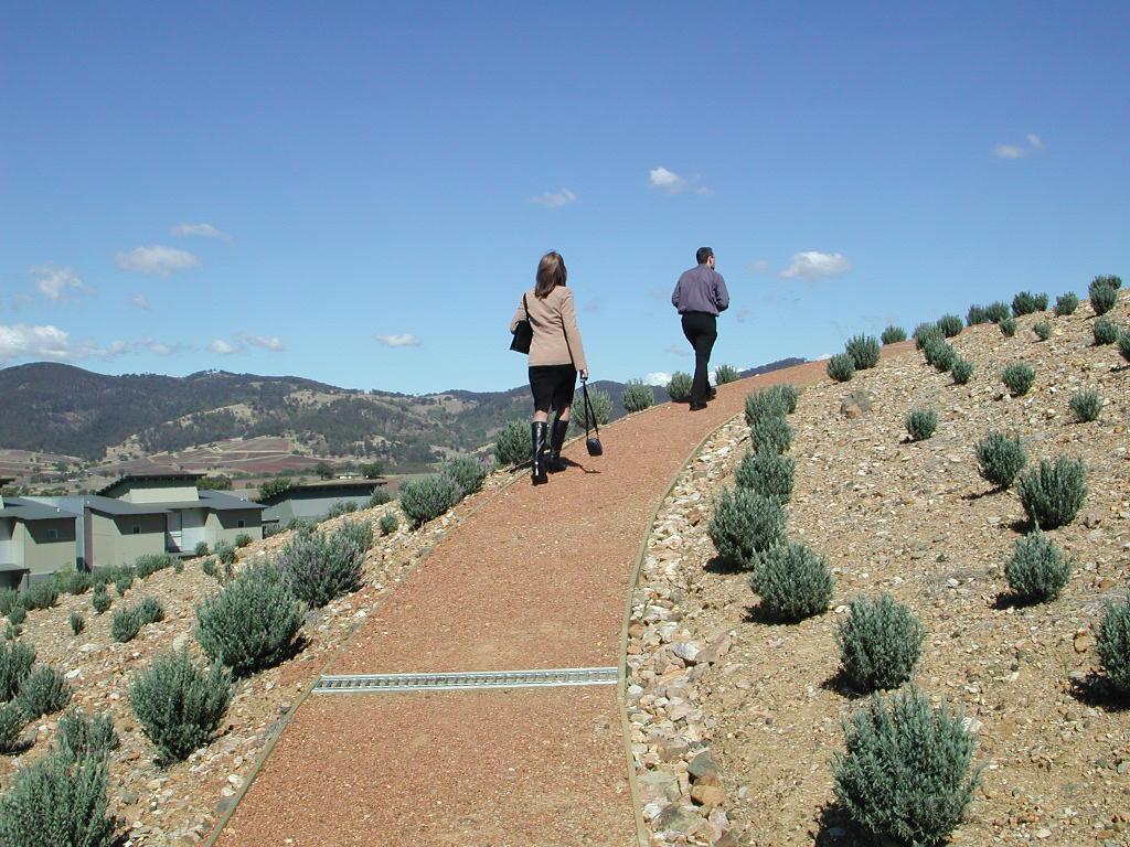 lavender hill2.JPG