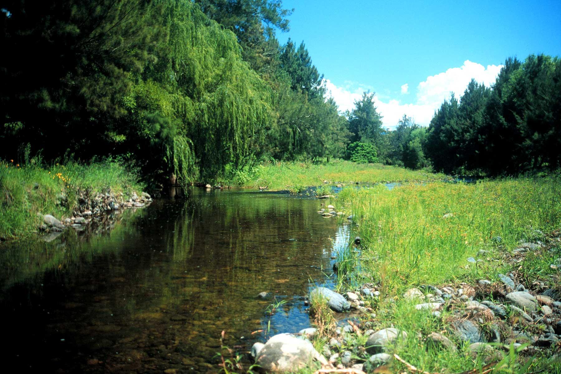 Alwyn-River,-GLC.jpg