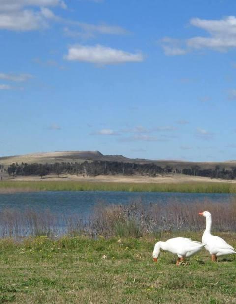Lake Liddel, UHSC.JPG