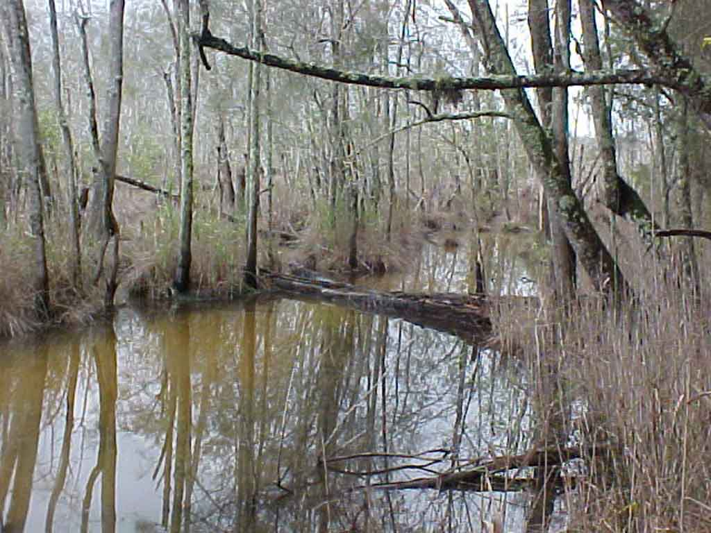 Nambucca Swamp (1).JPG