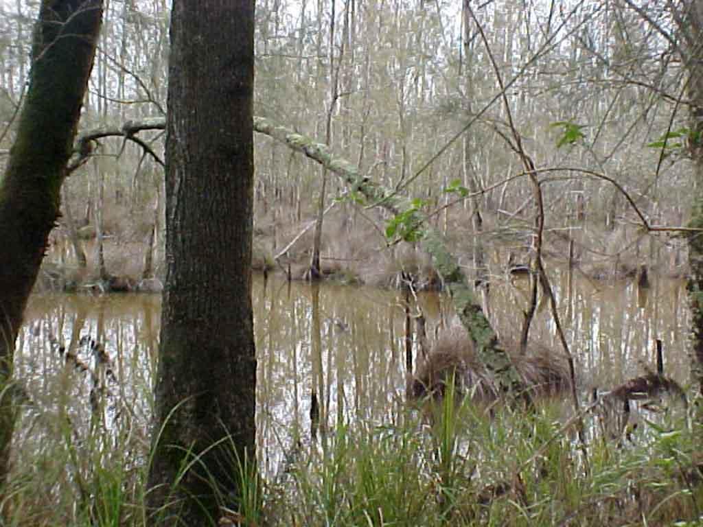 Nambucca Swamp (16).JPG