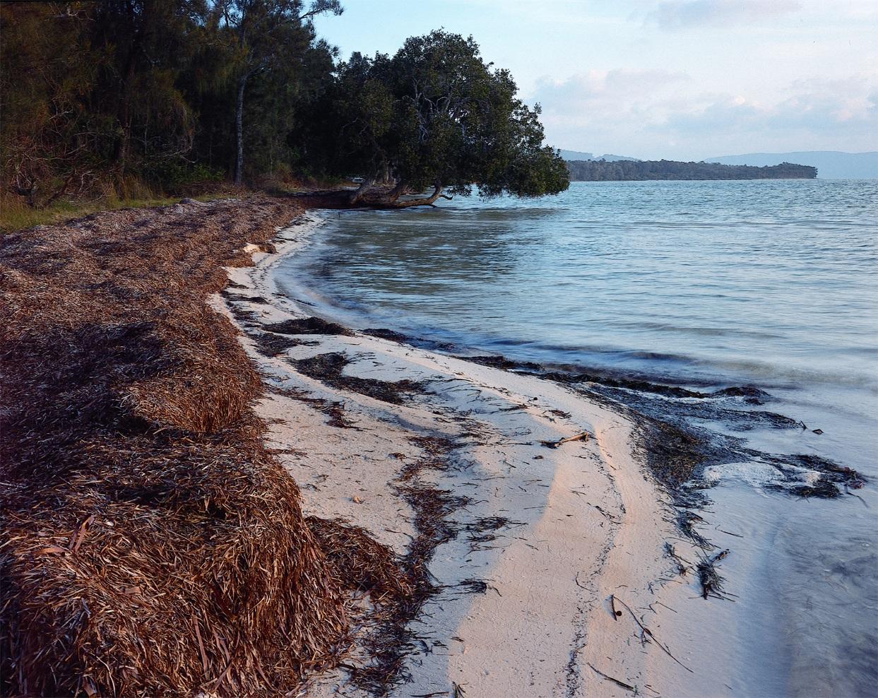 seaweed on lake shore.jpg