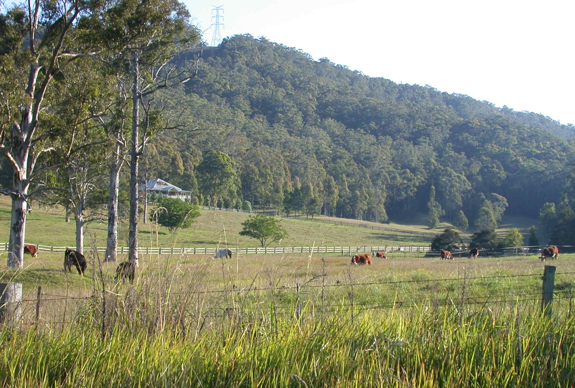 Yarramalong Valley 2.JPG